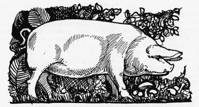 Pig-from-Food-in-England.png