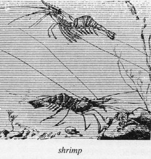 shrimp2077.jpg