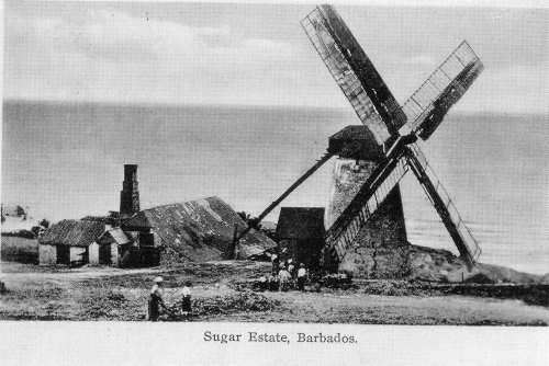 Barbados-sugar-estate.jpg