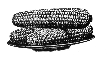 corn_on_plate.jpg