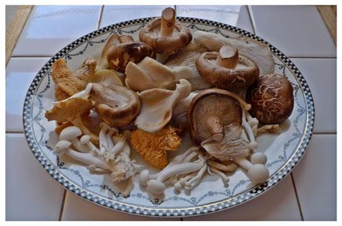 mushrooms_on_a_plate_sm.jpg