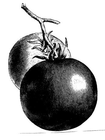 twotomatoes.jpg