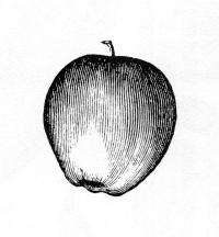 Apple002.jpg