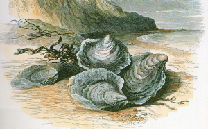 oysters095.jpg