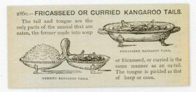 Curious_kangaroo001.jpg