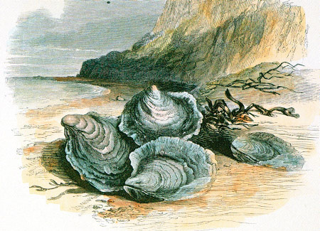Oysters-in-a-bed.jpg