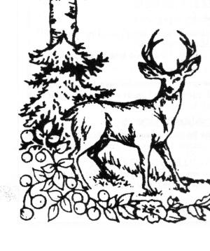 Adirondack Park Deer