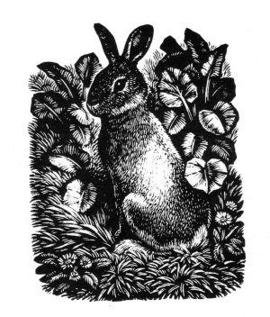eng-rabbit191.jpg