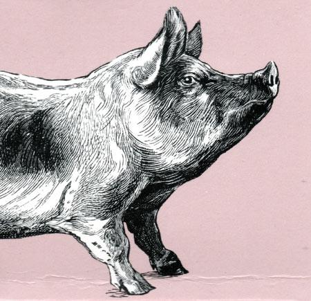 Pigs-nose-whiskey.jpg