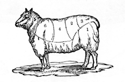 Lamb Cuts