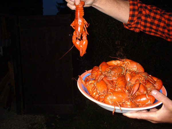 Crawfish_sm.jpg