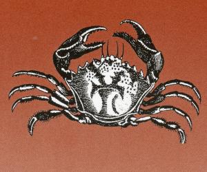 crab100.jpg