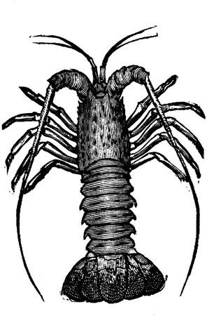 lobster-antique-image.jpg