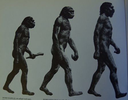 Evolutionary Progress